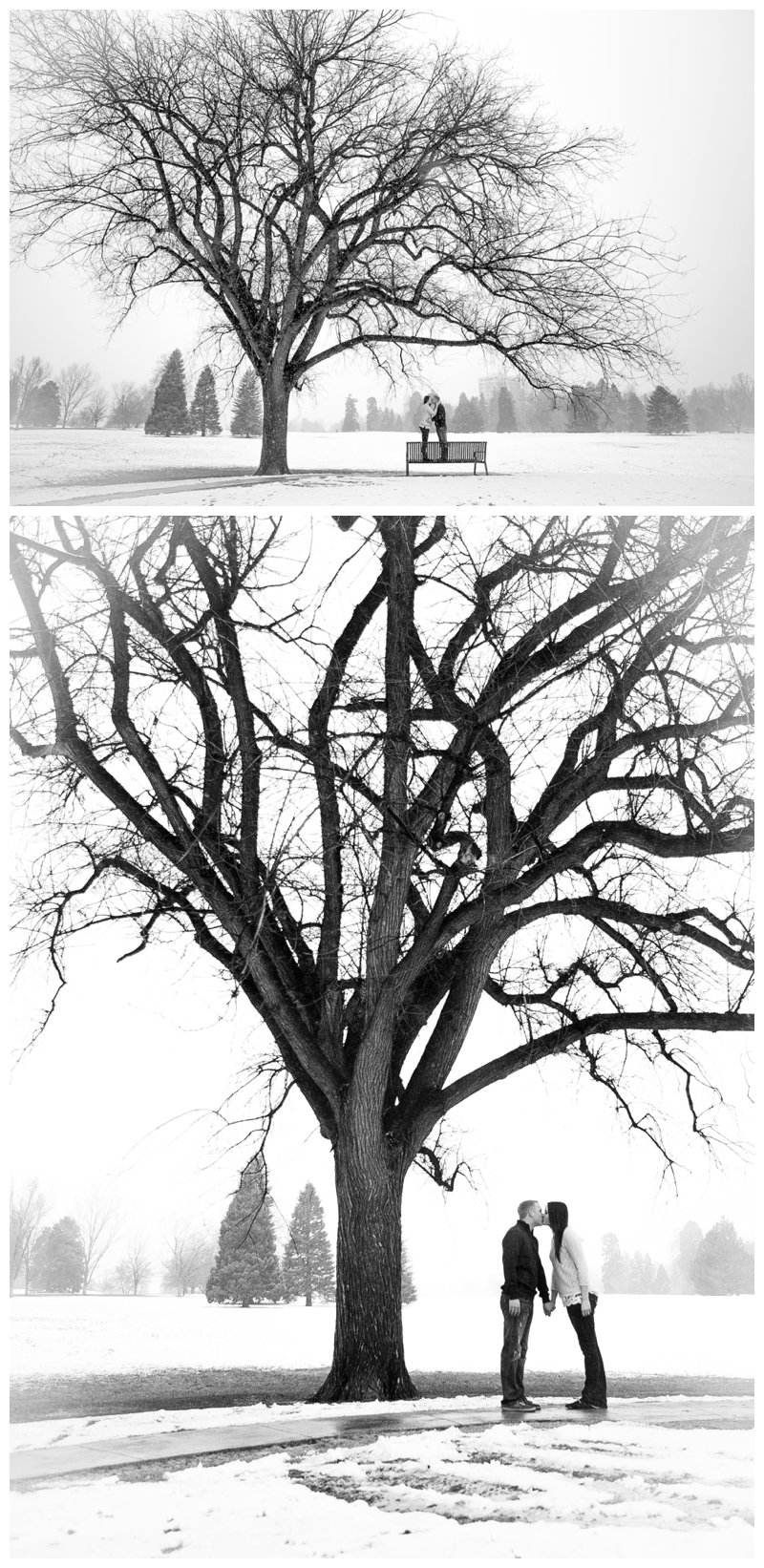 snow tree winter engagement
